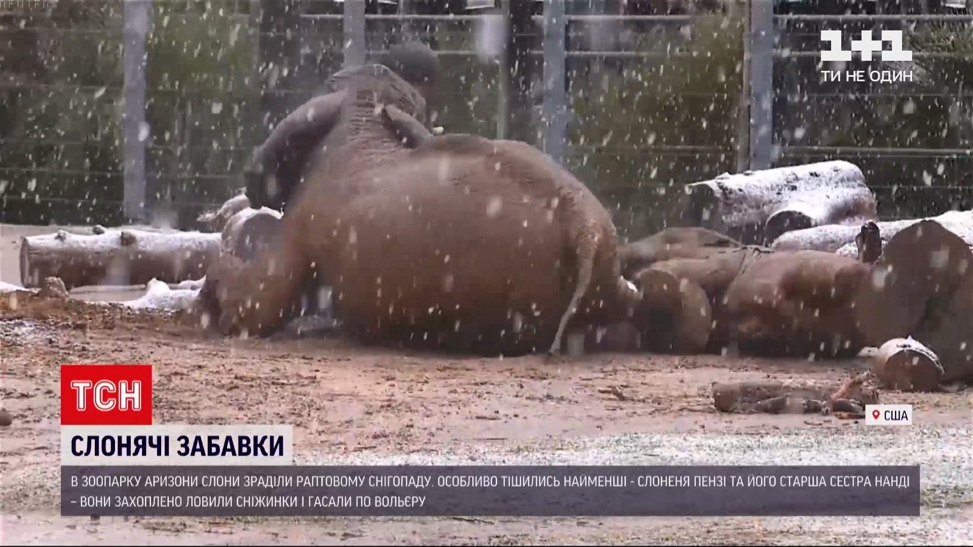 Слонам снег пришелся по душе / скриншот из видео