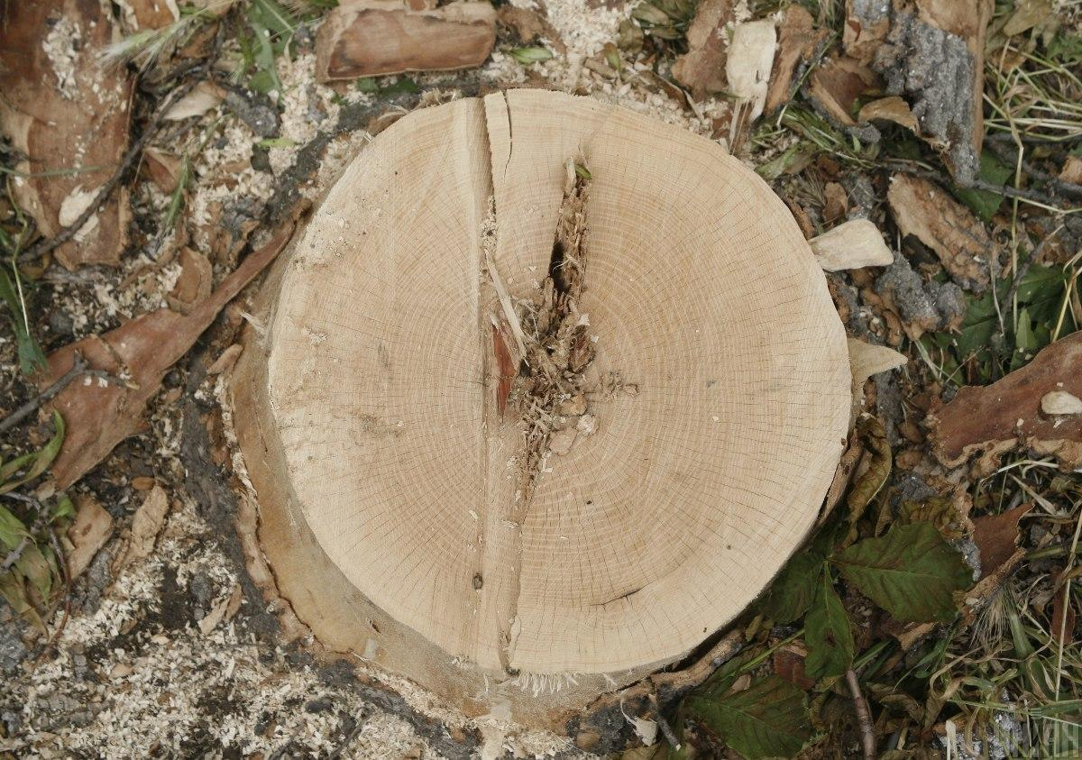 Передбачено штраф від 8,5 до 17 тисяч гривень за умисне знищення дерев та інших зелених насаджень / фото УНІАН