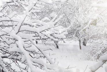 Негода продовжується: Карпати засипало снігом, а на сході холод до -25° (фото)