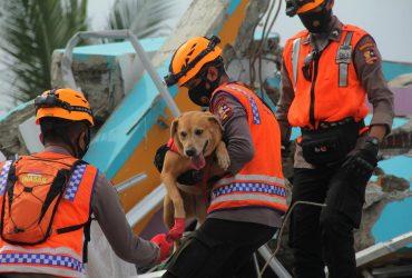 Кількість жертв землетрусу в Індонезії зросла: понад півсотні людей (фото)