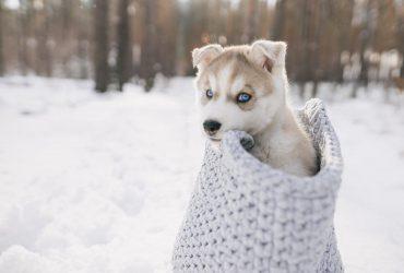 Мороз буде кусатись: синоптик розказала про погоду на завтра