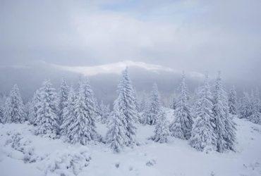 Туманы и метели: в Карпатах выпал метр снега (фото, видео)