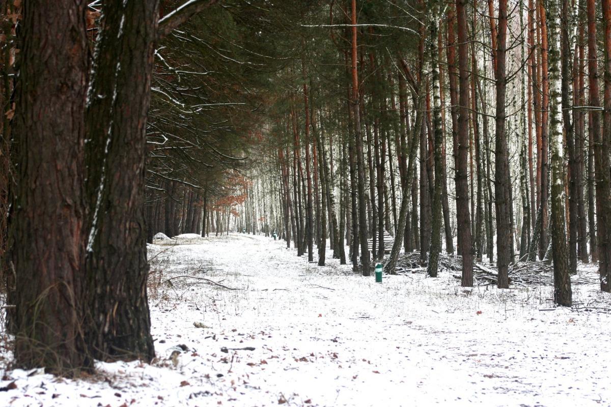 Взимку в Парку живої природи «Беремицьке» найлегше побачити звірів / фото facebook.com/beremytske