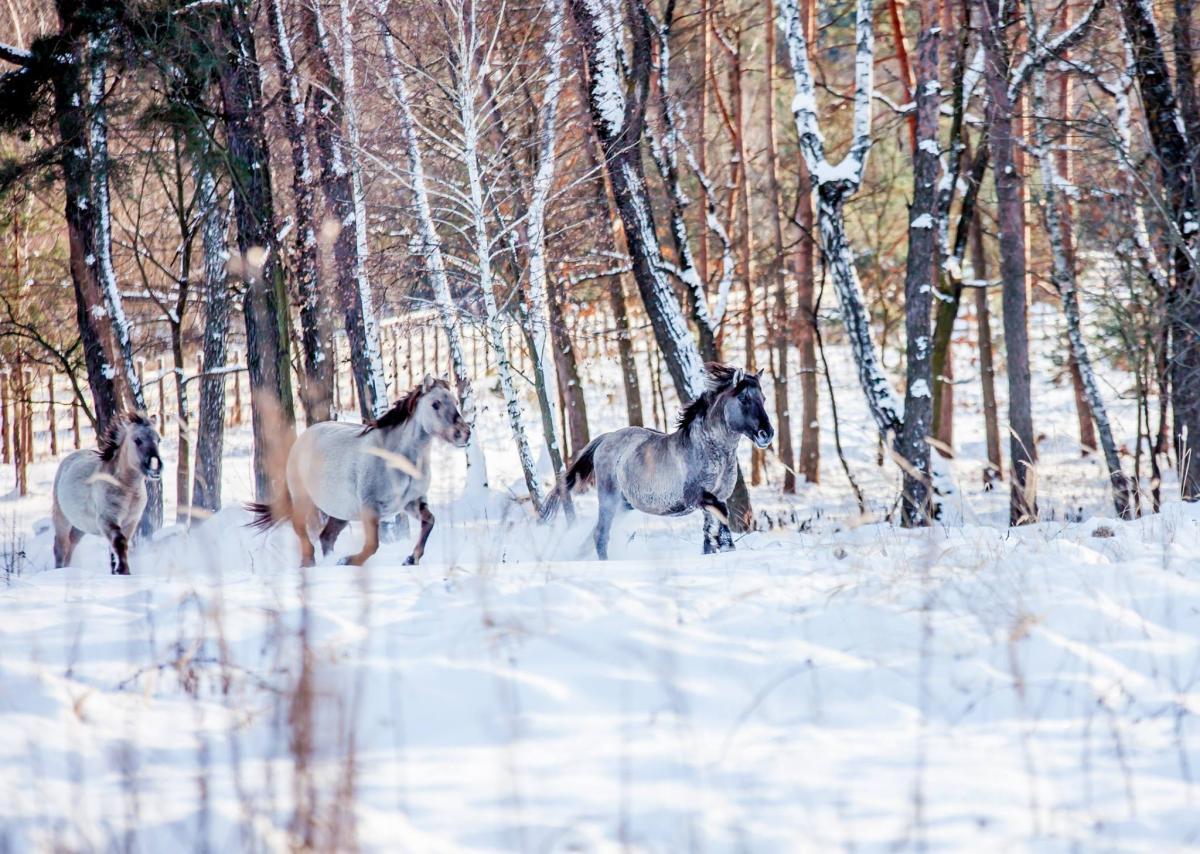 Зимовий Парк живої природи «Беремицьке» / фото facebook.com/beremytske
