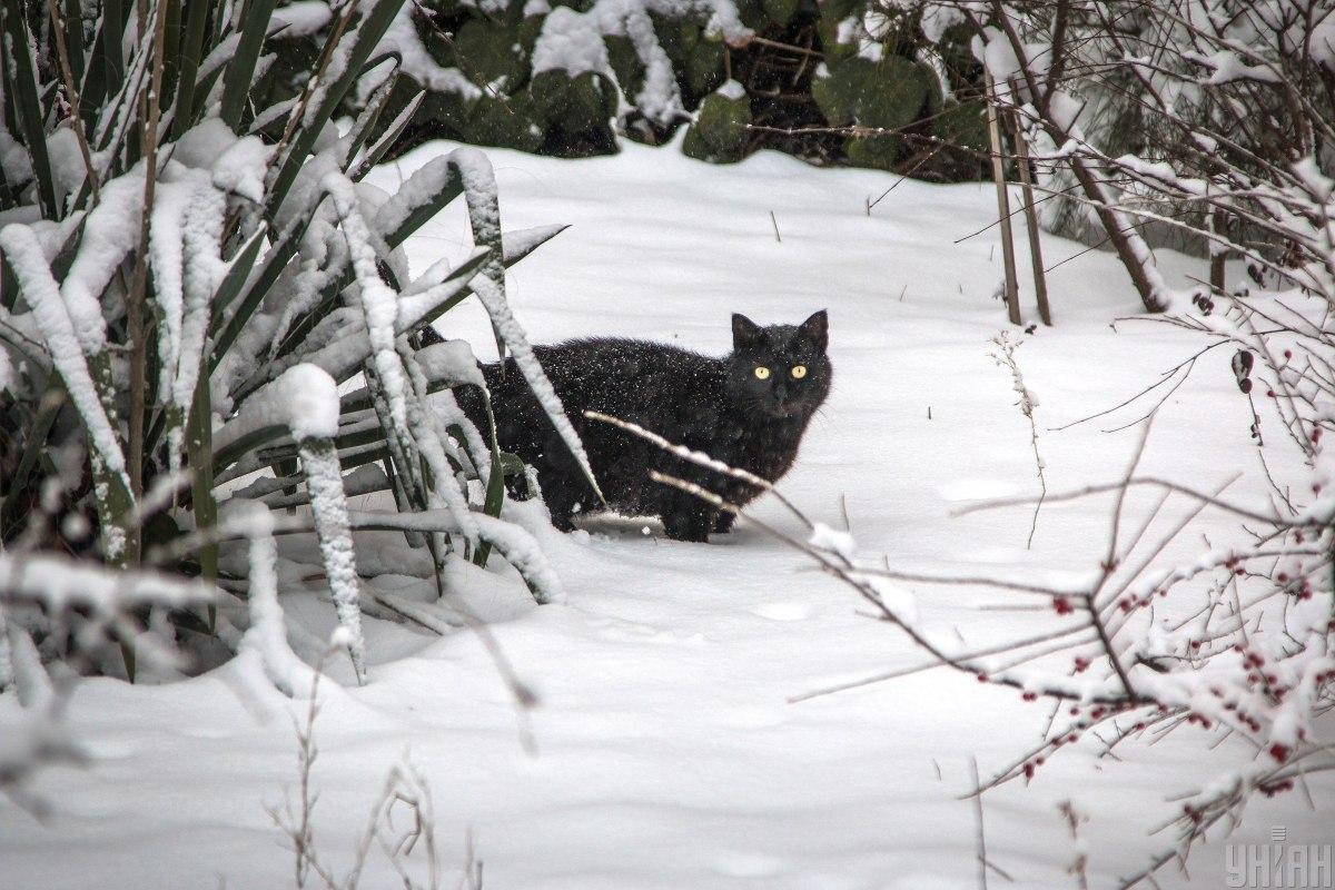 Сегодня в Украину снова вернется зимняя погода / фото УНИАН, Гиманов Александр