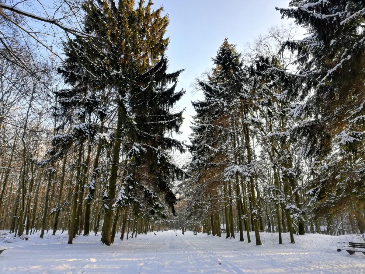 Министр отметил, что вопрос вырубки лесов неоднозначен \ фото Марина Григоренко