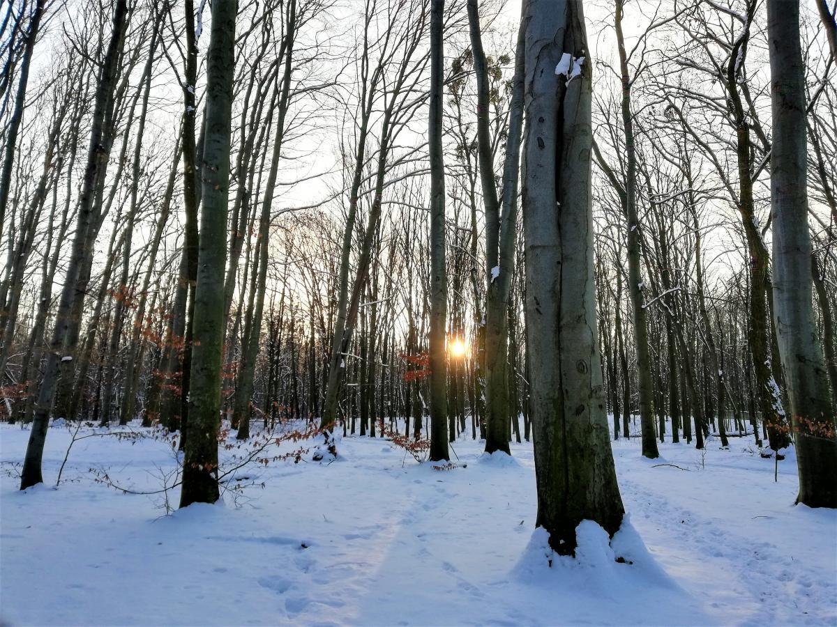 Зимний лес тоже очень красивый / фото Марина Григоренко