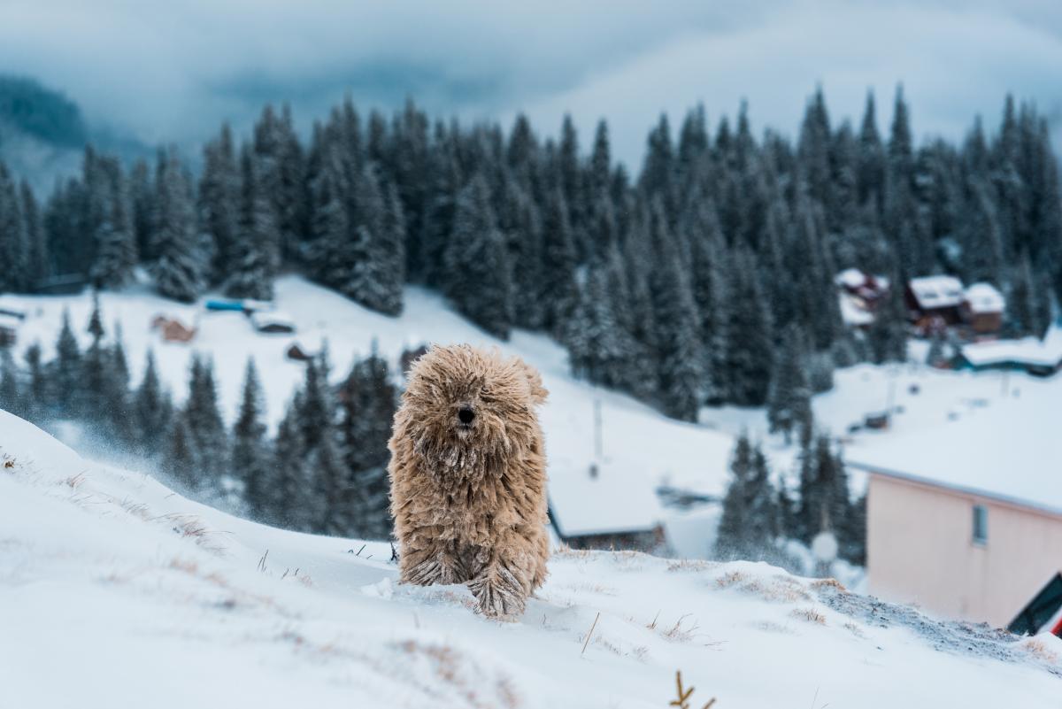 В Украине установилась настоящая зимняя погода / Фото ua.depositphotos.com