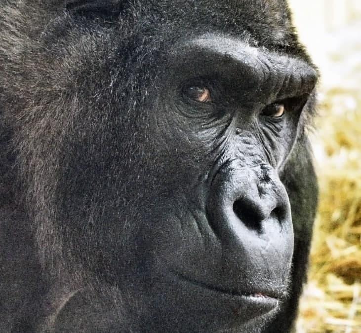 По человеческим меркам ему больше 90 лет / facebook Киевский зоологический парк