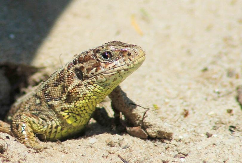 Услуга по кормлению рептилий «бывшими возлюбленными» будет платной / фото zooclub.org.ua