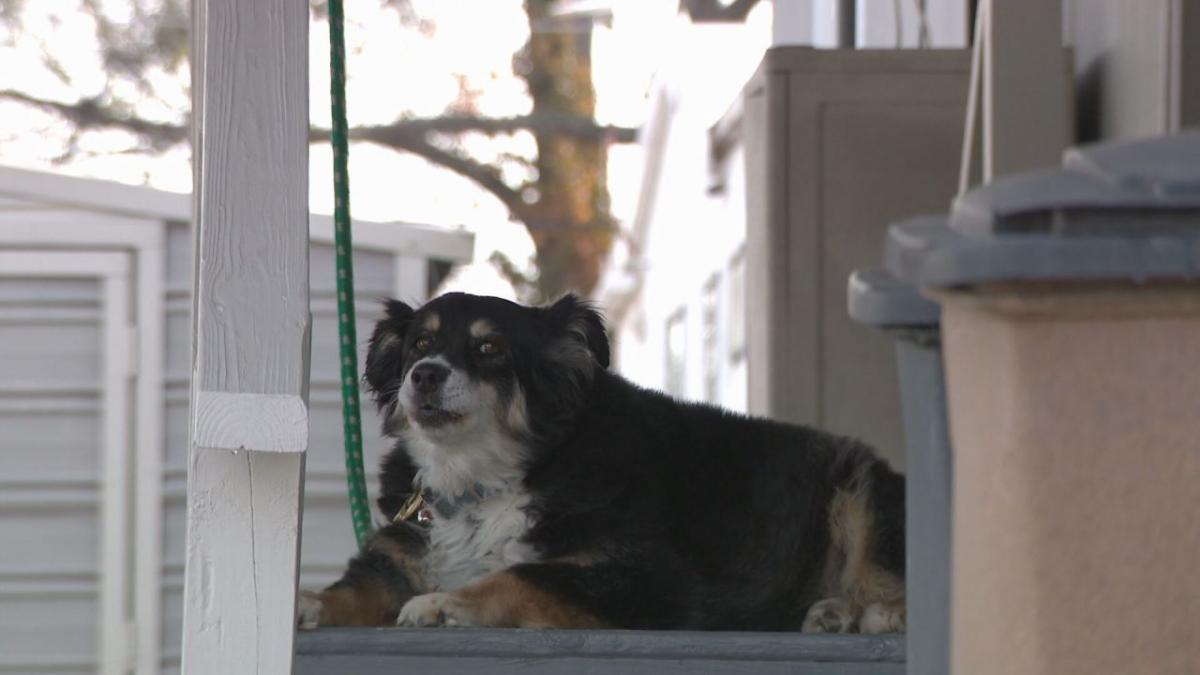 Собака Лулу получила в наследство пять миллионов долларов/ фото WTVF