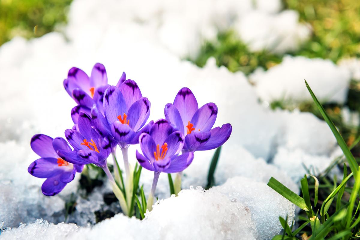 Вихідніта свята в березні 2021 року / фото ua.depositphotos.com