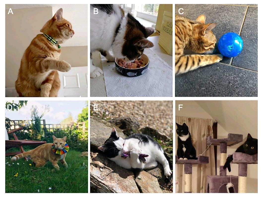 Вчені вирішили перевірити, як зміна умов утримання кішок вплине на кількість принесеної ними здобичі / фото Current Biology