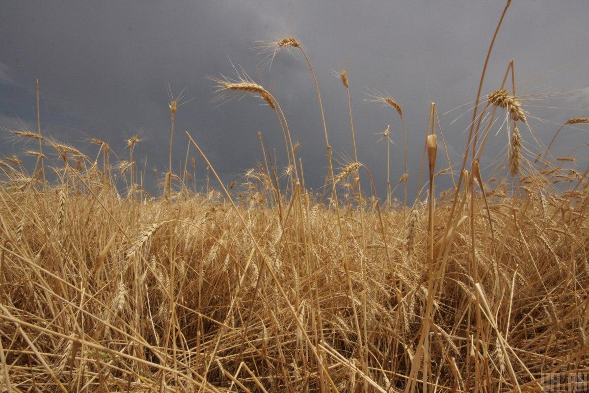 Уряд схвалив законопроект прострахування аграріїв від стихійних явищ/ фото УНІАН, Олексій Сувіров