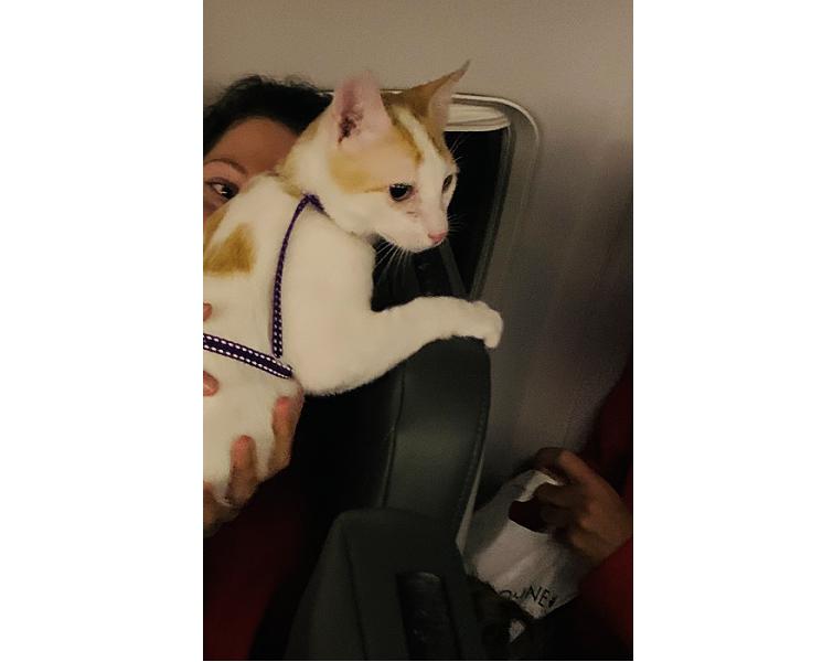Главный пассажир / фото автора