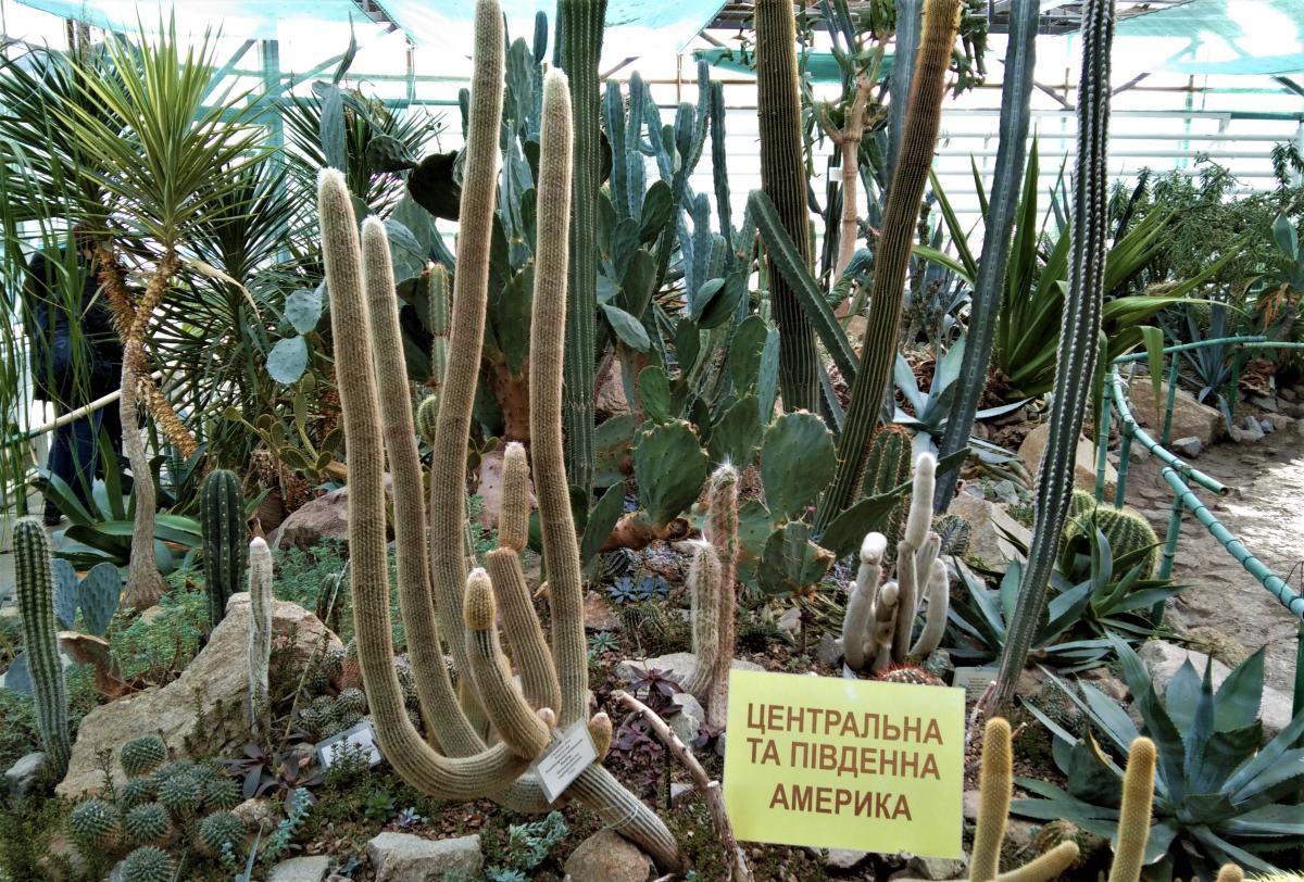 В оранжерее довольно большая коллекция кактусов / фото Марина Григоренко
