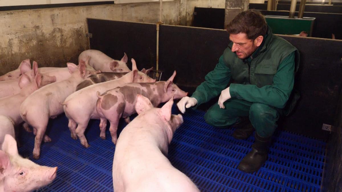 Австрієць Томас Бруннер заснував в Україні бізнес і понад десять років вирощував свиней без антибіотиків