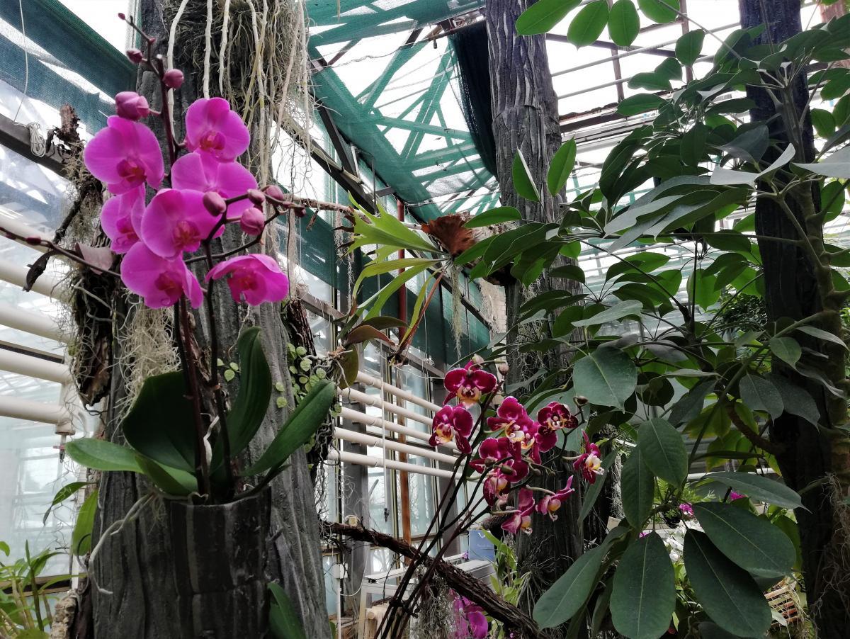Орхідеї в київському ботсаду Гришка / фото Марина Григоренко