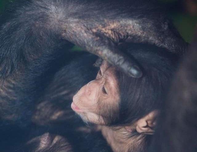 Обидва малюки - хлопчики, їм один та два місяці / фото facebook.com/FeldmanEcopark