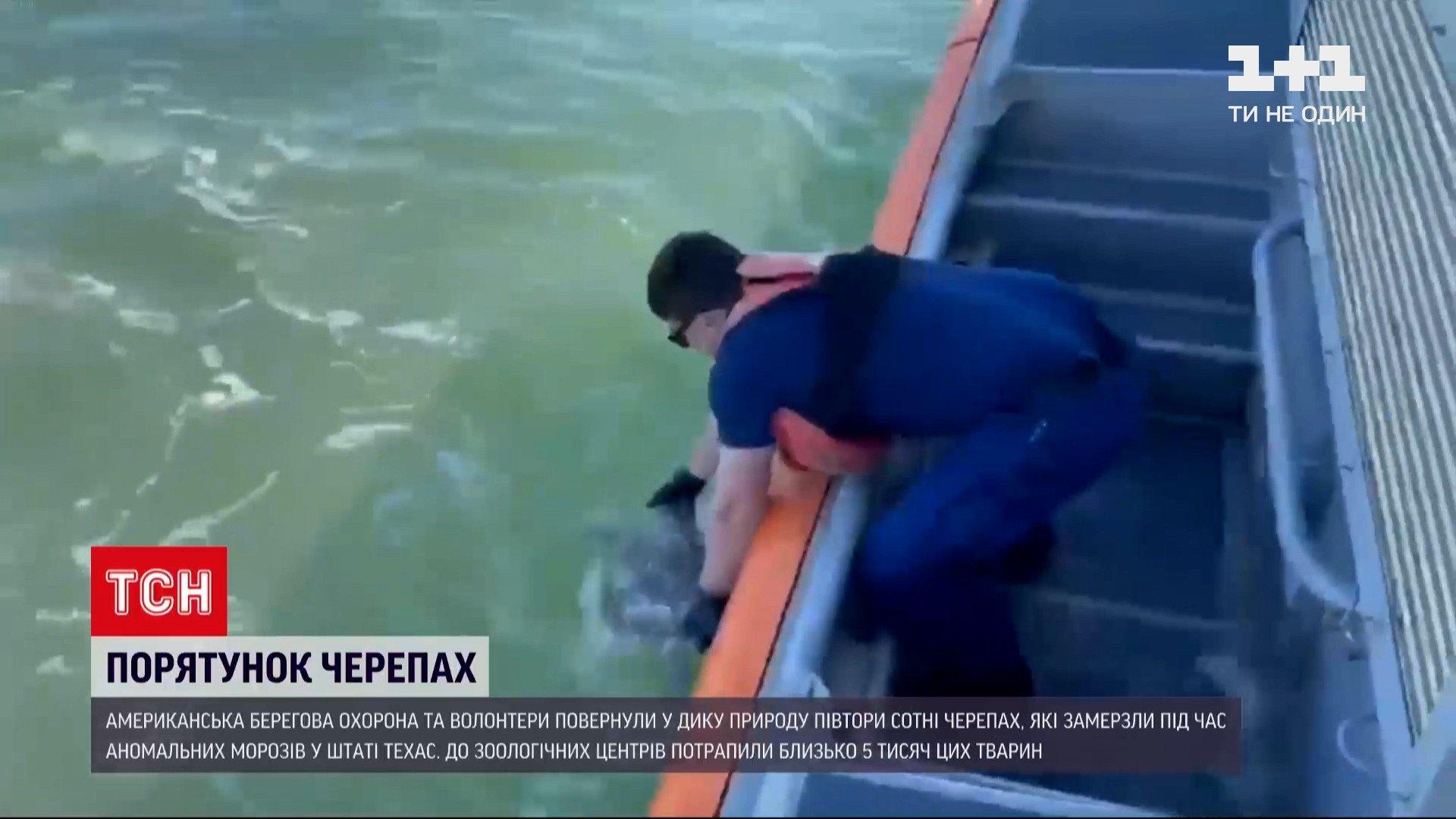 Врятованих черепахвипустили на волю в США