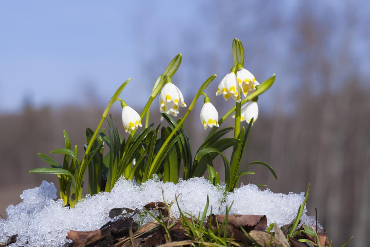 Весна в этом году будет холодной / Фото ua.depositphotos.com
