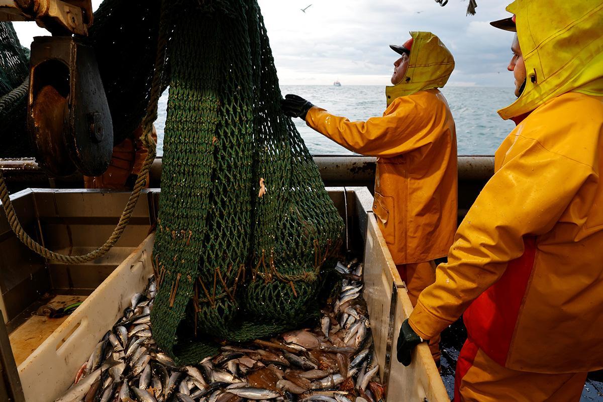 В течение января-апреля украинские рыбаки выловили в морях более 1127 тонн рыбы / Иллюстрация REUTERS