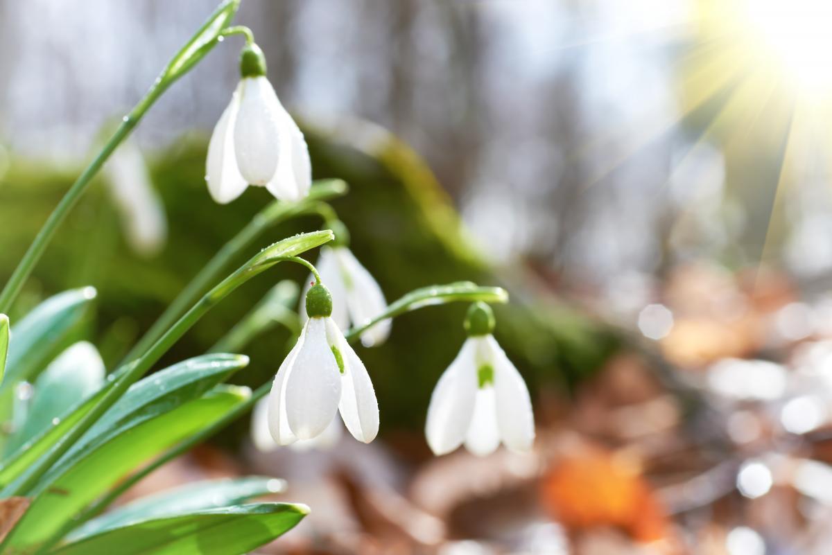 сьогодні узахідних областях очікується раптове потепління / Фото ua.depositphotos.com