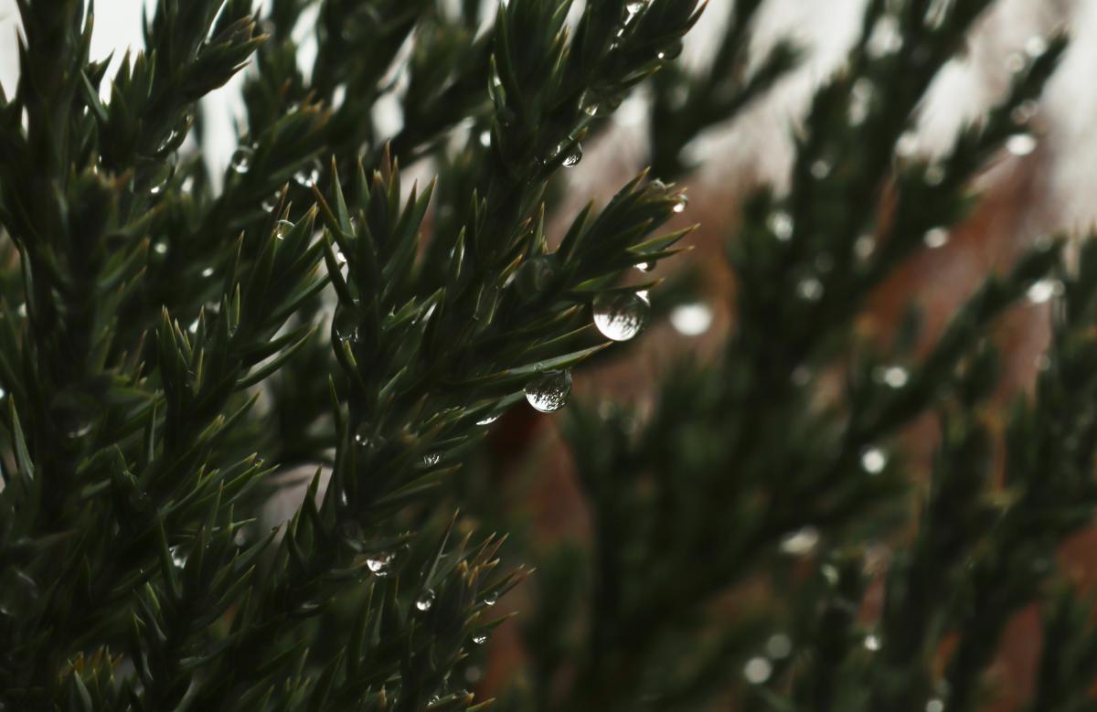 Сьогодні уКиєві очікується невеликий сніг з дощем / Фото ua.depositphotos.com