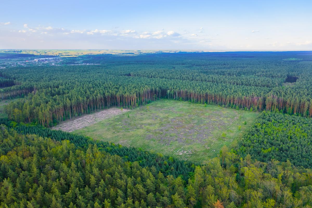 Дождевые леса Амазонии занимают половину общей площади всех тропических лесов мира / фото ua.depositphotos.com
