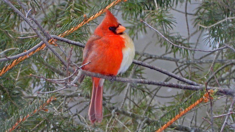 Хілл спостерігає за птахами вже 48 років \ JAMIE HILL / ВВС