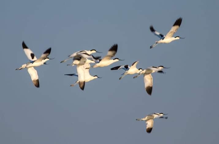 В останній день зими в заповідник прилетіли рідкісні і дуже красиві птахи / фото Іван Русєв