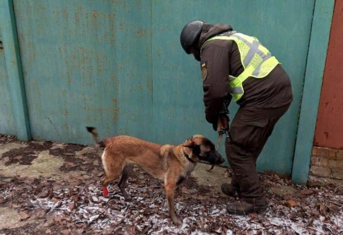 Схрон с боеприпасами — пес спас военнослужащих от «растяжки» —