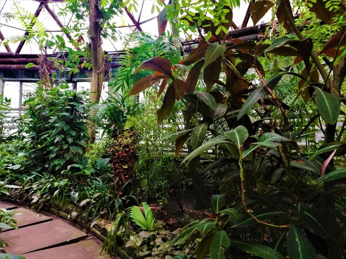 Оранжерея при ботсаде Фомина известна своей тропической коллекцией / фото Марина Григоренко