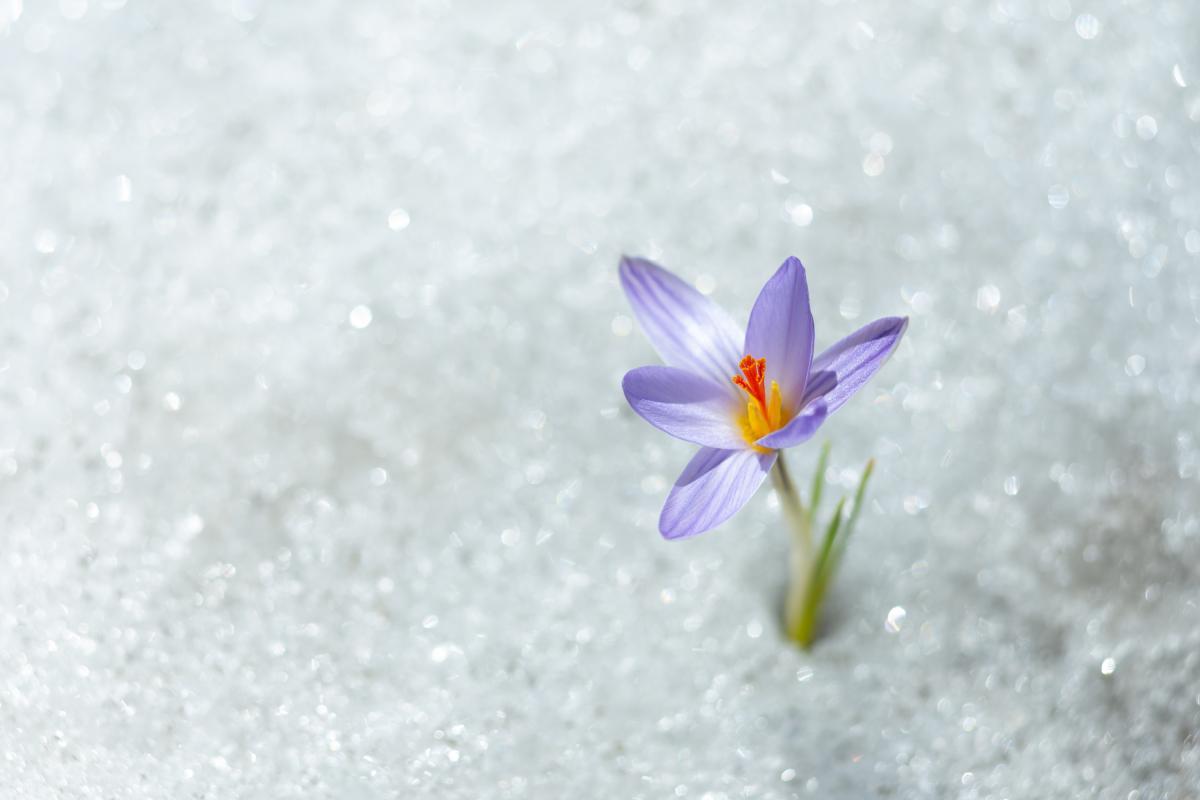 На 8 Березня може піти сніг / Фото ua.depositphotos.com