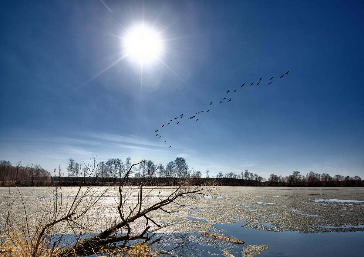 Вже у четвер в Україні потеплішає / Фото ua.depositphotos.com