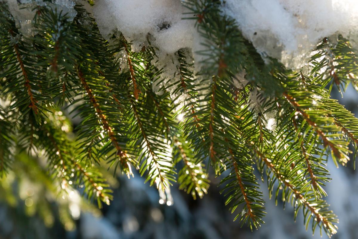 В двух регионах России выпал снег / Фото ua.depositphotos.com