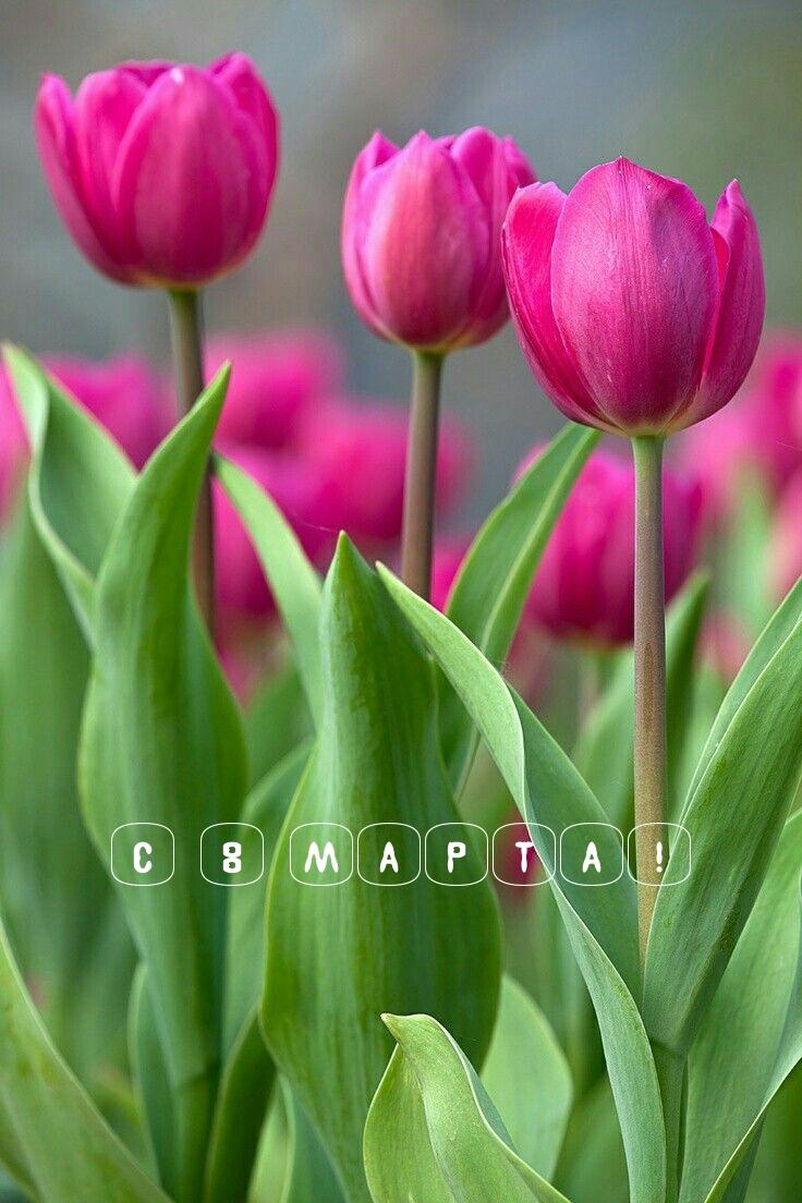 Поздравления с 8 марта / фото imagetext.ru