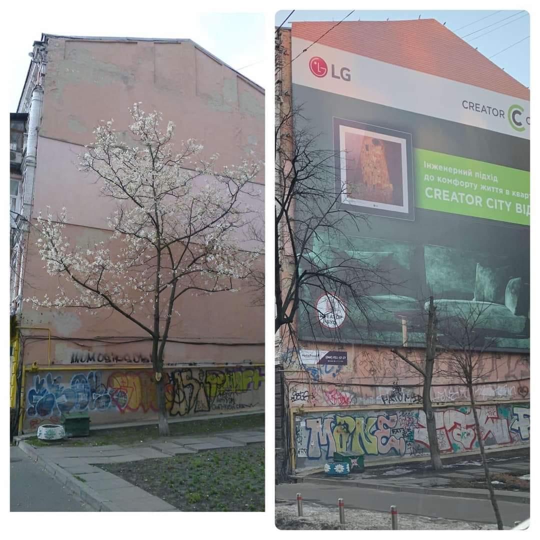В Киеве ради рекламы уничтожили дерево/ Facebook