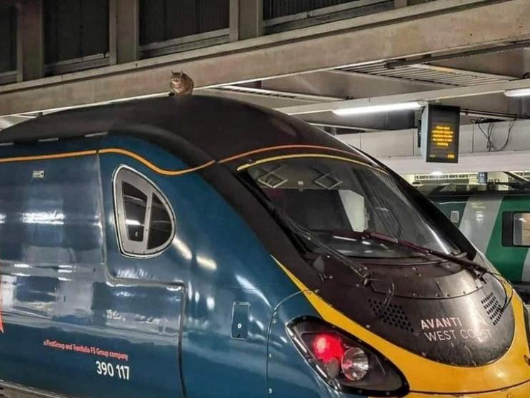 Кота на даху поїзда помітили приблизно за півгодини до відправлення / фото Network Rail