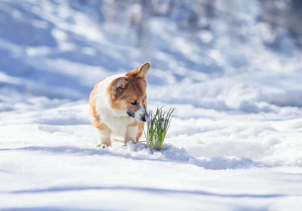 Завтра в некоторых областях ожидается снег / Фото ua.depositphotos.com