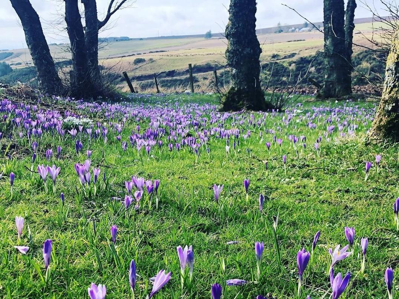 В Европе в полном разгаре цветение крокусов / фото Instagram
