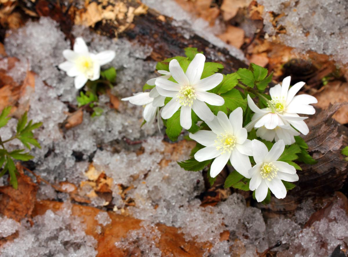 Народные приметы и обычаи 25 марта / фото ua.depositphotos.com