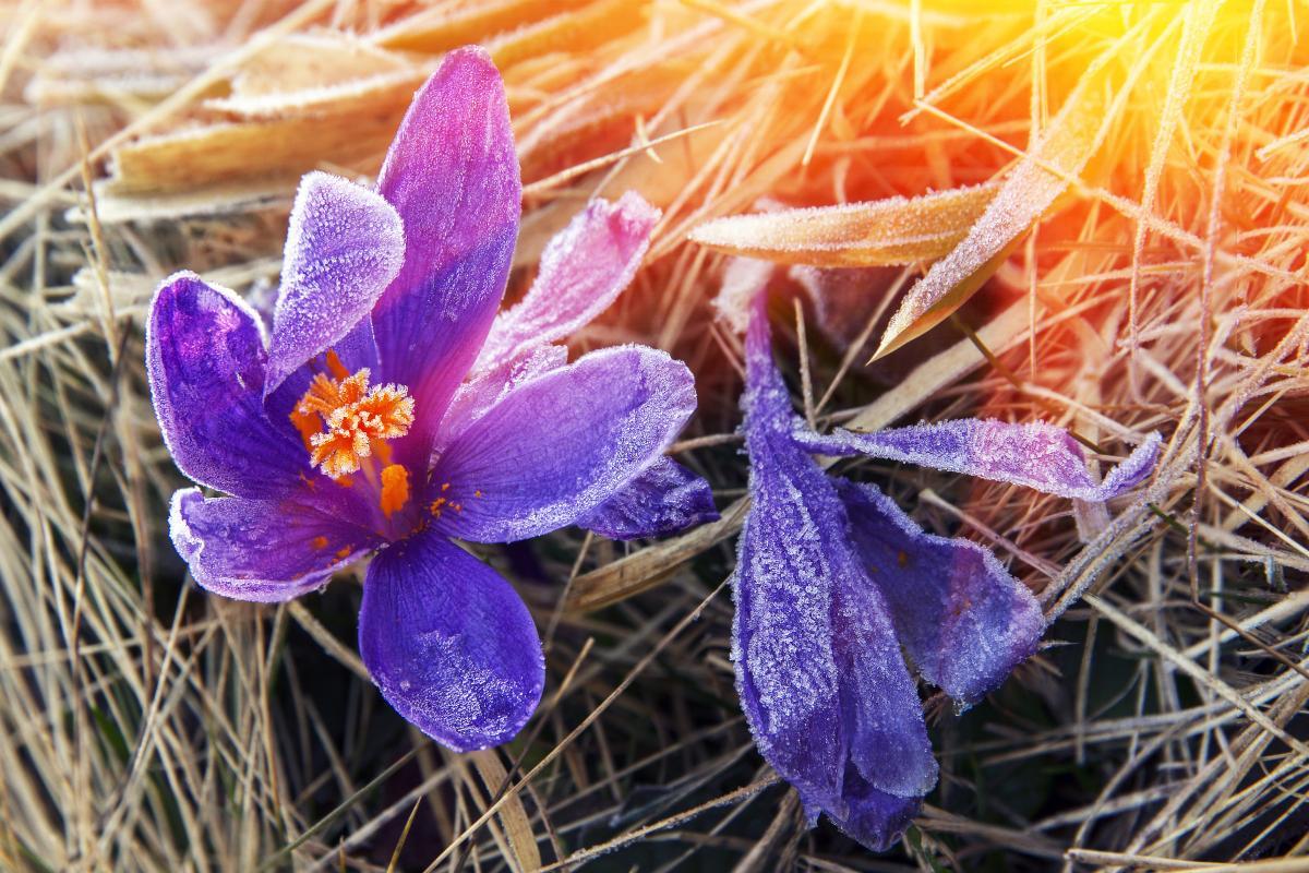 Мороз не поспішає залишати Україну / Фото ua.depositphotos.com