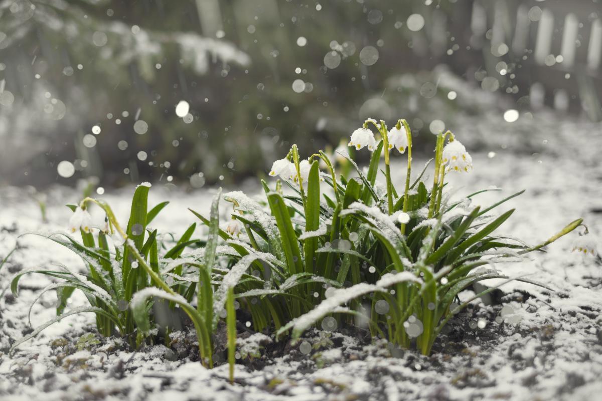 На этой неделе в стране ожидаются снегопады / Фото ua.depositphotos.com