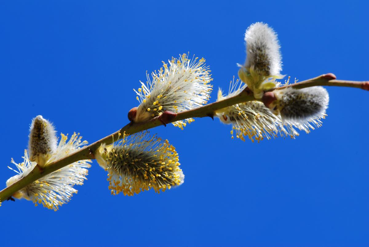 Когда придет настоящее весеннее тепло / фото ua.depositphotos.com