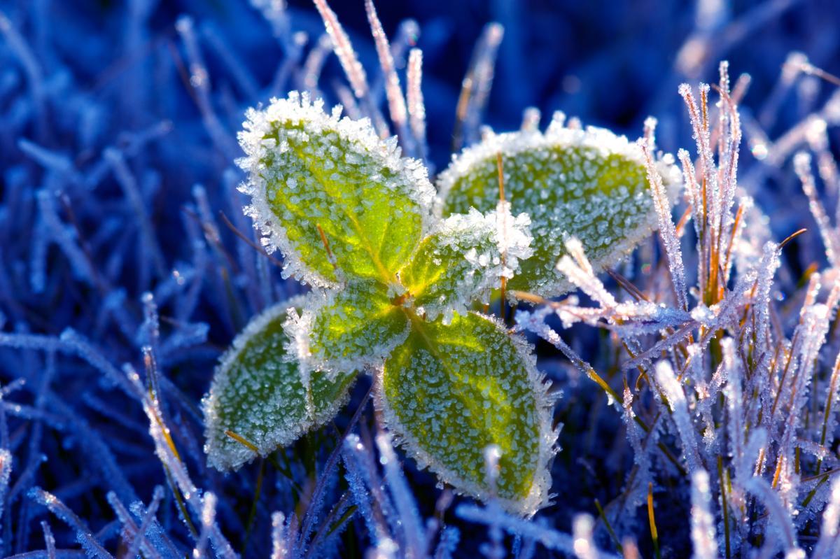 В Украине ожидаются заморозки / Фото ua.depositphotos.com