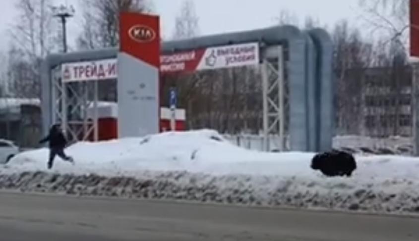 Медведь бегал по городу в России / скриншот