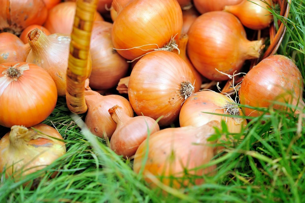 20 вересня народне свято прикмети / фотоua.depositphotos.com
