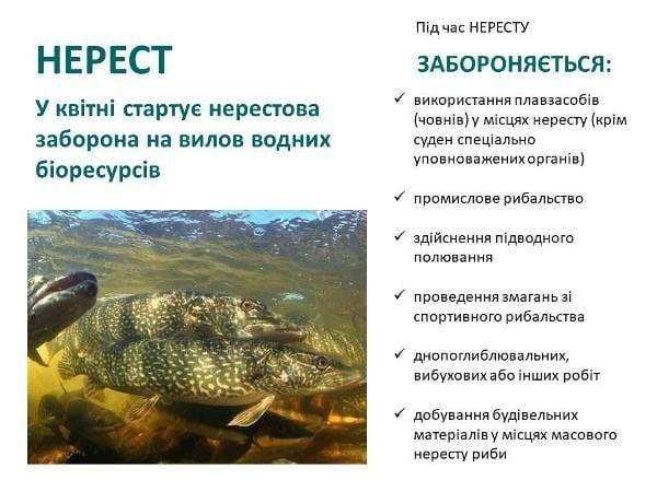 Вылов рыбы в Украине - что запрещено с 1 апреля/ фото facebook.com/dargua