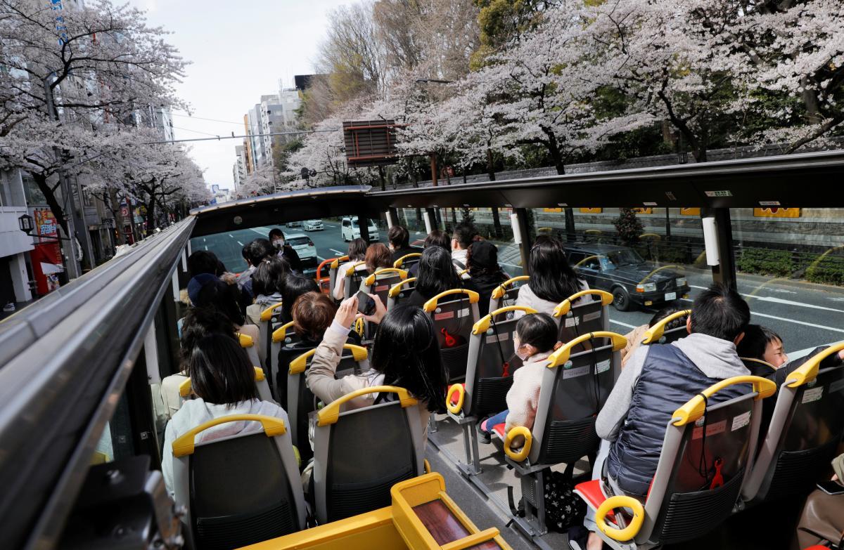 В Японии сейчас как раз сезон цветения сакур / фото REUTERS